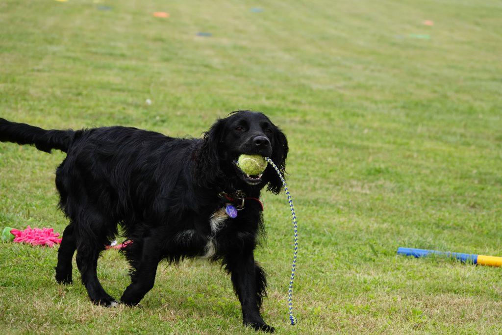 Black Dog With Ball
